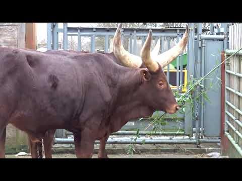 Dieren voederen - Sanctuary De Zonnegloed