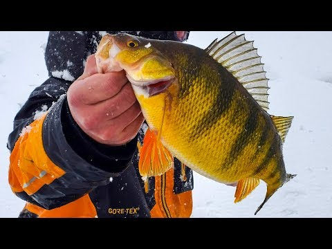 Ice Fishing JUMBO Perch In A BLIZZARD