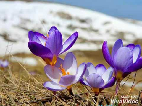 Топ  картинок про весну