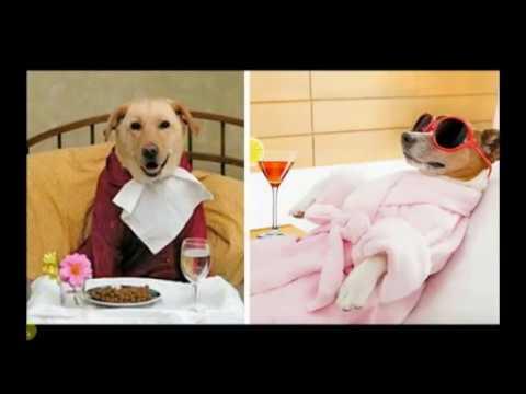 133 CISNE Radio Dignidad Humana vs animalismo