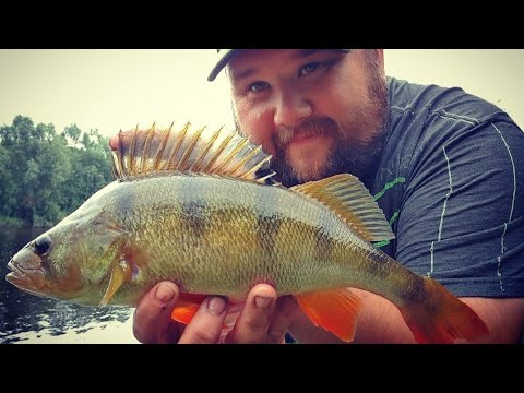 River Ribble Stick Float Fishing - Big Perch And Roach
