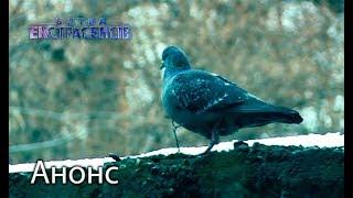 Голубь смерти – Битва экстрасенсов 18. Смотрите 13 мая
