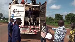 Tabaski 2017 : Le circuit d'approvisionnement en bétail sécurisé