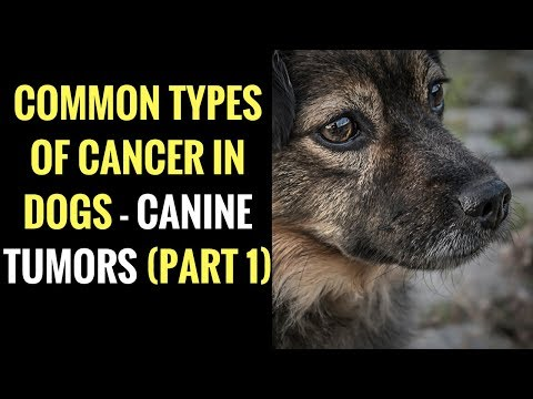 Common Types of Cancer in Dogs - Canine Tumors (PART 1)