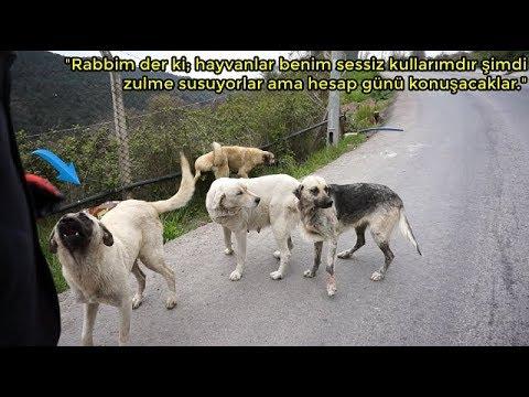 Çöplükte Ölüme Terkedilen Sokak Köpeklerinin Halini Görünce Göz Yaşlarınıza Haki