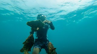 Jackpot sa Grouper - Freediving hunting using Giant clam shell | Catch and Sell