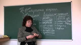 видео Услуги №7