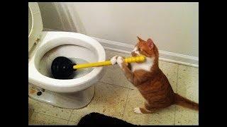 Download Смешные коты и другие животные 2017 Mp3 and Videos