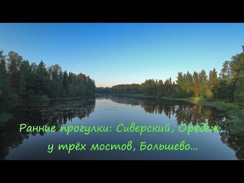 Ранние прогулки: Сиверский, Оредеж, у трёх мостов, Большево...июнь 2019.