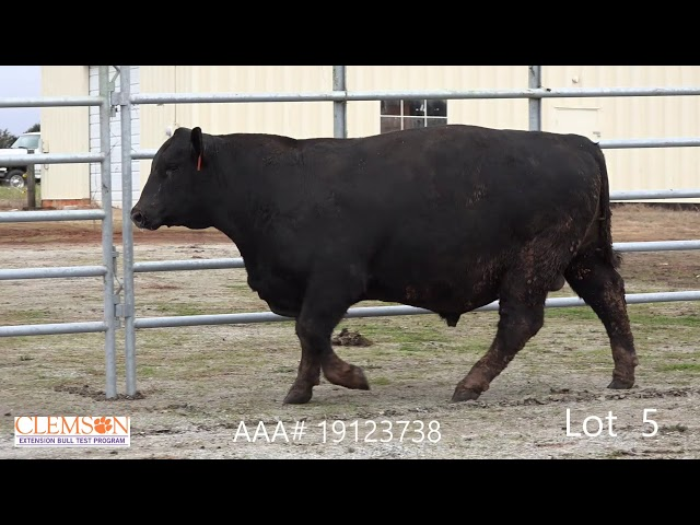Clemson Extension Bull Test Lot 5