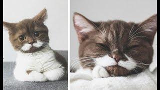 Поразительный котёнок стал звездой инстаграм