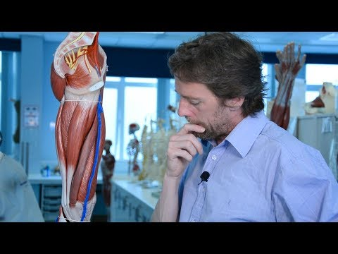 Veins Of The Lower Limb (varicose Veins, DVT)
