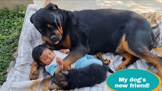 Jerry ​​became very excited to meet baby and puppy||German Shepherd