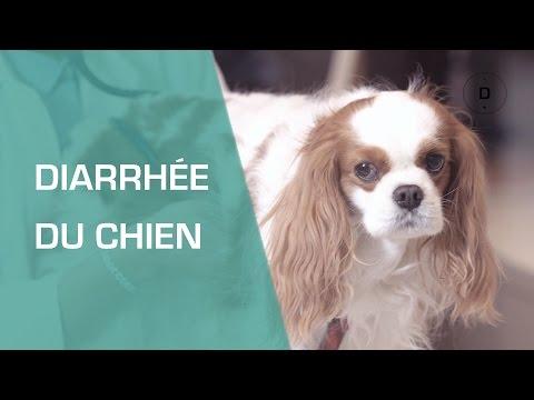 Diarrhée Du Chien - Animaux