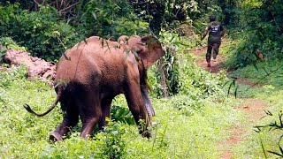 Repeat youtube video ELEPHANT ATTACK IN  FOREST AT  KERALA