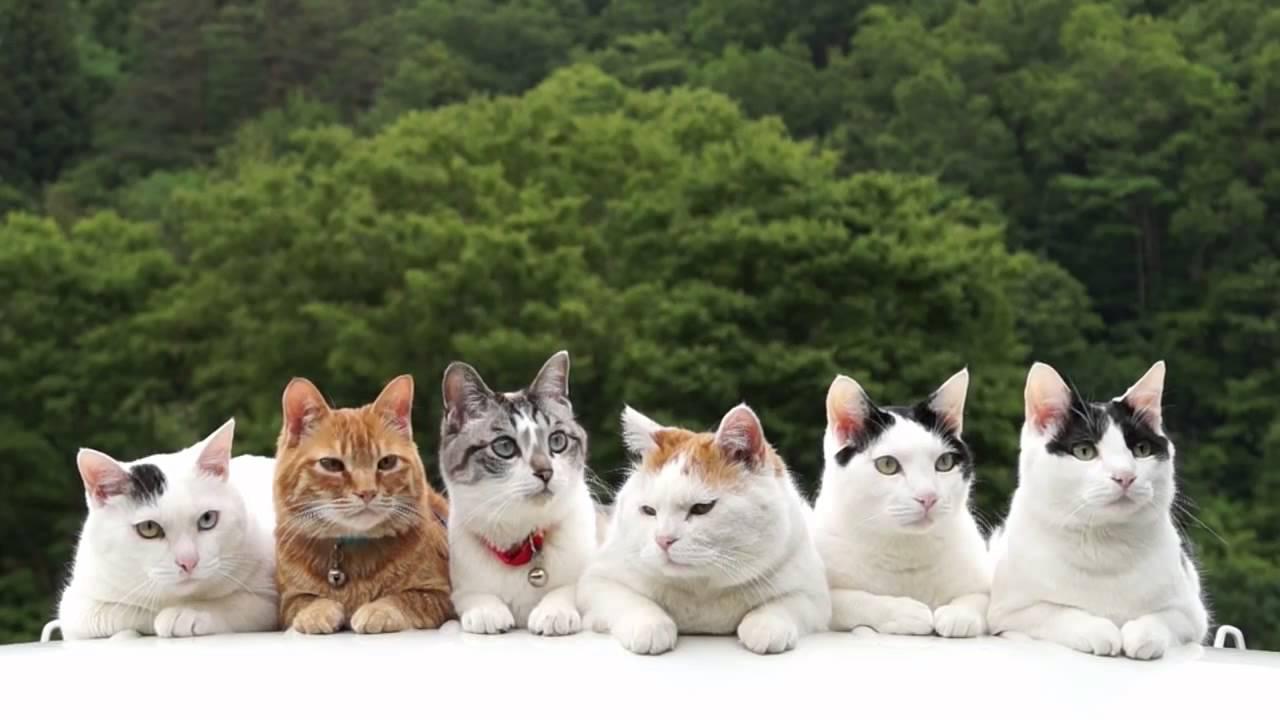 six cute cats 2015   youtube