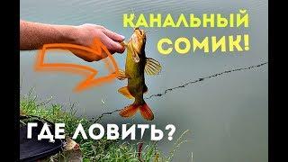 Как ловить канального сомика? Нерест и места обитания канального сома!