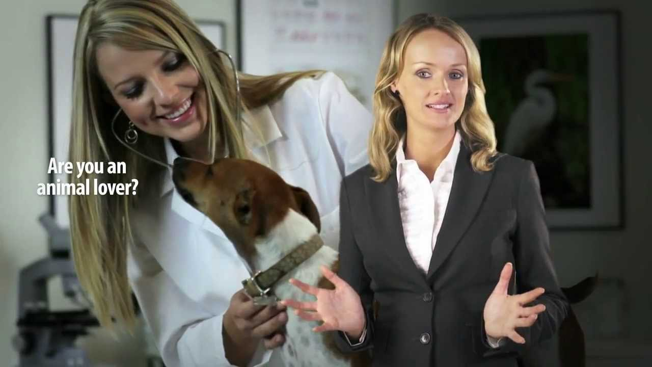 Pet Care Vet Assistant How To Become A Vet Assistant Youtube