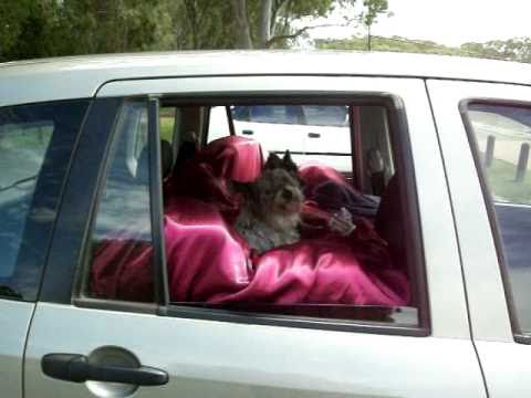 Home Made Doggy Booster Seats
