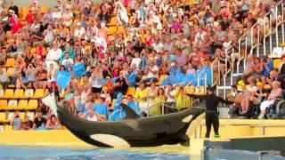 🐋 Киты касатки играют с детьми! Whales made kids wet!