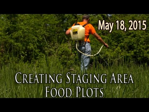 Midwest Whitetail | Staging Area Food Plots for Deer Hunting