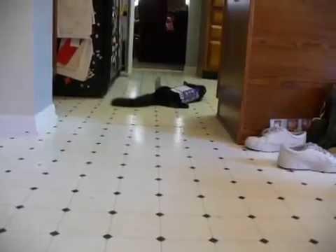 Silly Cat Trick – Koto & Lyra