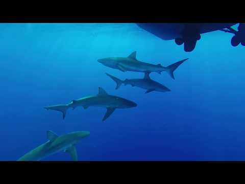 Shark Cage Diving and one Whale - North Shore Oahu, Hawaii