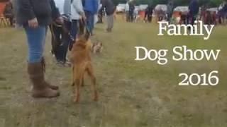 Family Dog Show Mudeford Wood Community Centre 2016