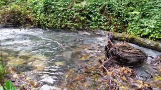 8 часов расслабляющих Звуков Природы - Звуки Реки и Леса, Пение птиц