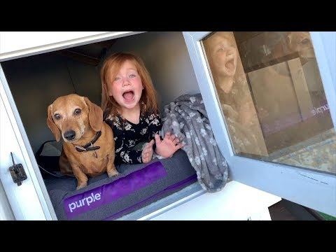 Hidden Surprise In Our Backyard Dog House Mansion!!  Family Fun With Adley And Niko!
