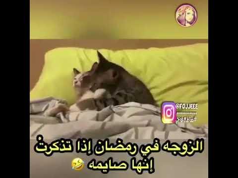 حالات واتس اب مضحكة عن رمضان الزوجه في رمضان أذه تذكرت انها صايما Youtube
