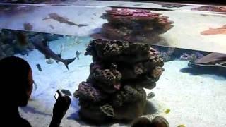 Mallorca Zoo Aquarium Hai - Shark