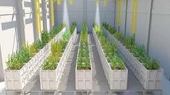 Pflanzenkulturhalle