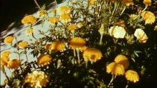 Seattle [1961 promotional film]