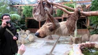 神戸どうぶつ王国 ナマケモノに飼育員が給餌しています。
