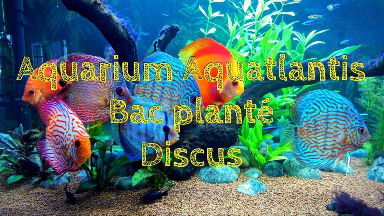 Aquarium aquatlantis 450 litres bac plant discus for Aquarium bac