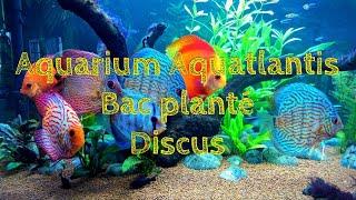 Aquarium Aquatlantis 450 litres bac planté - Discus - JiSeY