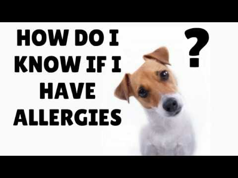 SKIN ALLERGIES IN DOGS