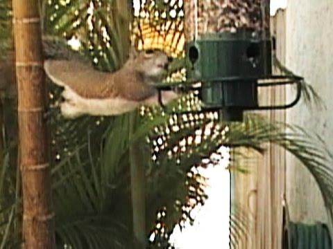 Delightful Yankee Flipper Squirrel Proof Birdfeeder FYV