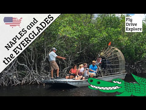Naples And The Everglades Florida Airboats And Alligators
