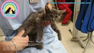 Ласковый котёнок со сломанными лапами и судьбой Помогите спасти и жить без боли Help the sick kitten