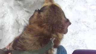"""Приют  """"Ржевка"""" (СПб) Прогулка  с собаками (позитив!=)"""