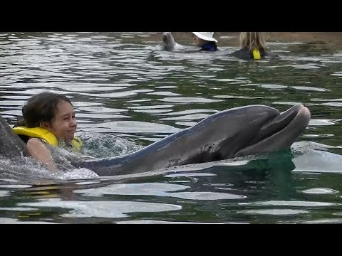 Swimming with Dolphins & Sharks at Discovery Cove Orlando!