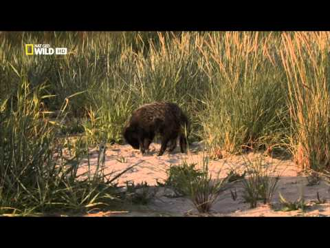 Ruská divočina - Tajuplný les