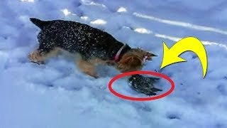 This Dog Found A Tiny Animal Frozen In The Snow  Then Her Owner Told Her To Get Away From It
