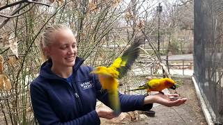 Behind the Scenes: Sun Conures