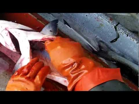 How to Clean a King Salmon