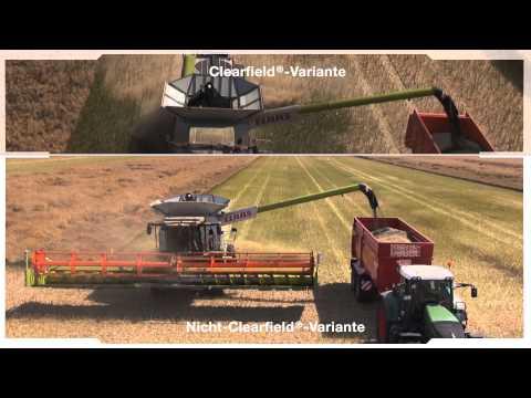 Das Clearfield®-System – Eindrücke bei der Ernte