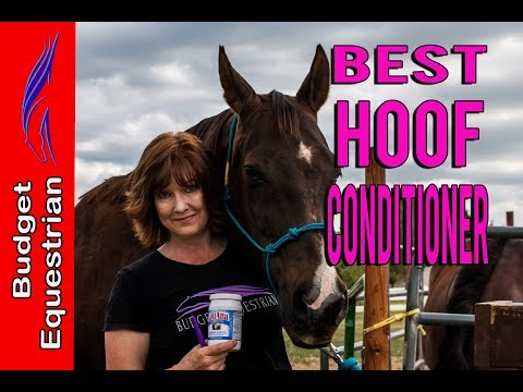 Best Hoof Conditioner For Horses   Budget Equestrian