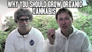 Why You Should Grow Organic Cannabis